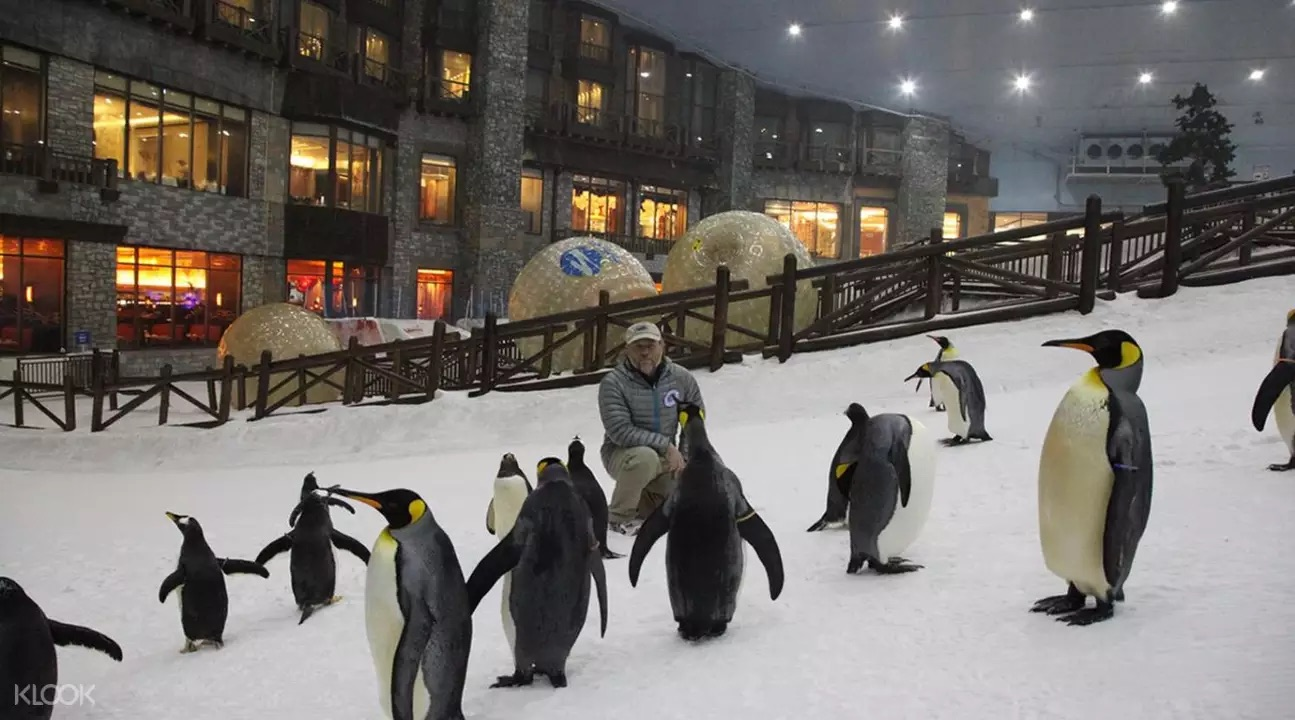 Penguins at Ski Dubai